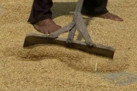 Presiden minta Bulog hitung harga gabah agar petani tidak merugi
