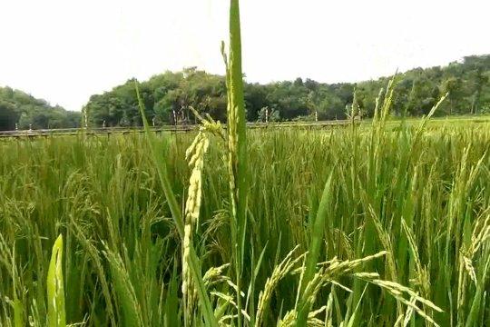 Kementan siap kembangkan lahan pertanian di Kalteng