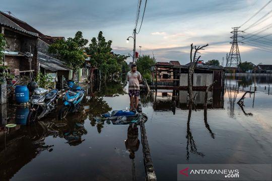Banjir rob di pesisir Demak