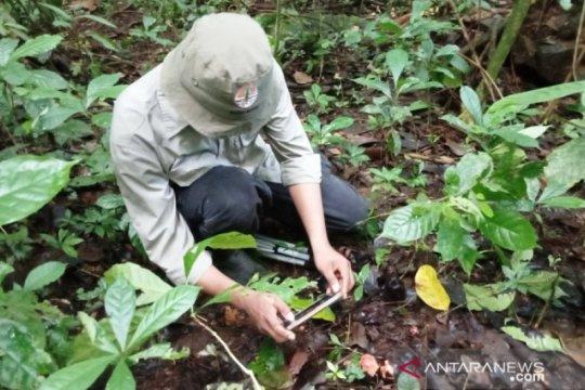 BKSDA temukan 26 lokasi sebaran tumbuhan langka di Danau Maninjau Agam