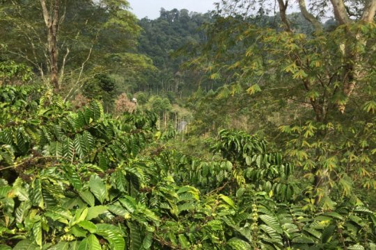 Balitbangtan terapkan konservasi hutan sosial, tekan laju erosi