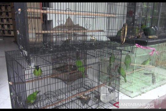 Balai Gakkum LHK Kaltim amankan 167 ekor burung dilindungi