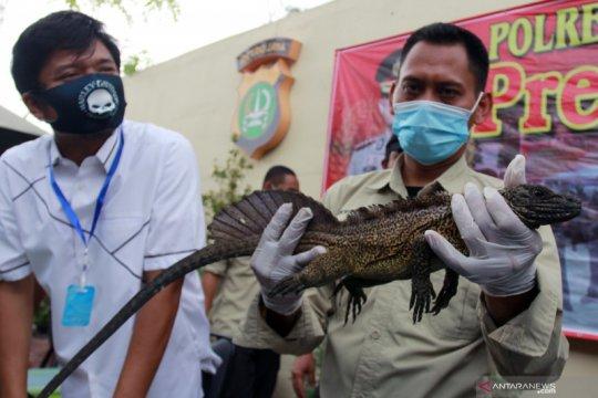 Penyelundupan reptil langka