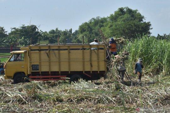 PTPN XI : Realisasi tebu yang digiling sebesar 646 ribu ton