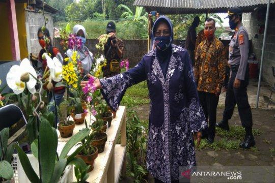 Yogyakarta miliki rintisan kampung pelestarian anggrek Merapi