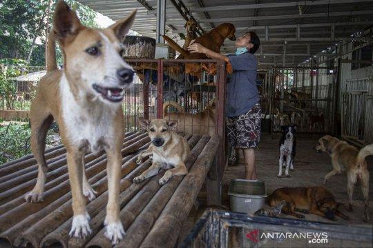 Penampungan anjing telantar kesulitan pasokan makanan