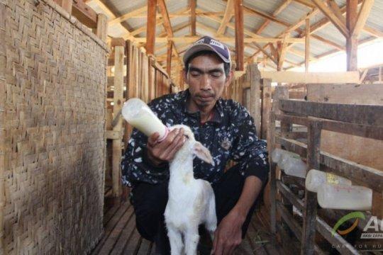 Ulama ajak umat Islam berikan hewan kurban terbaik