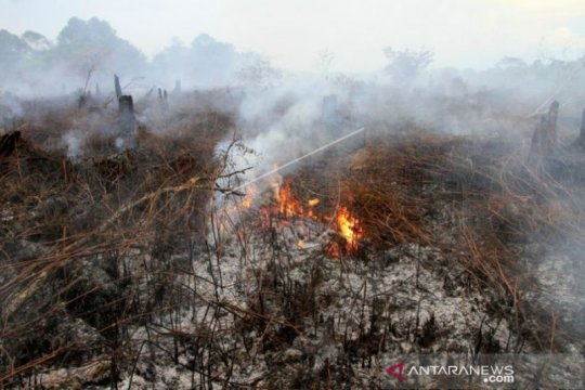 Lahan gambut 2,1 hektare di Aceh Barat terbakar