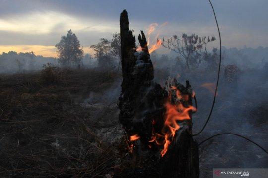 Kebakaran lahan gambut di Aceh Barat semakin meluas