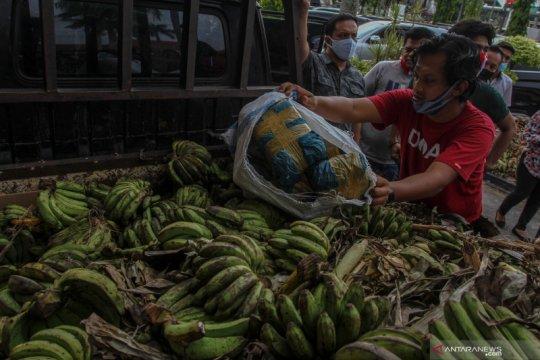 Polisi gagalkan penyelundupan ganja di balik pisang