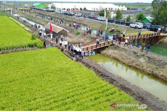 Balitbangtan siap optimalisasi budidaya padi lahan rawa