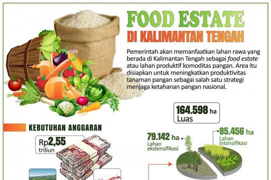 Food Estate di Kalimantan Tengah