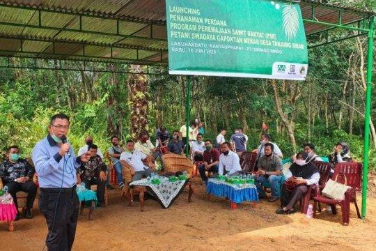 Di tengah COVID-19, perusahaan dampingi petani remajakan sawit