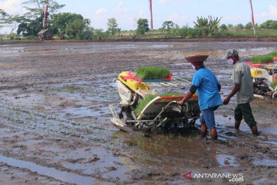 Siapkan cadangan pangan, Kementan intensifikasi lahan rawa 30.000 ha