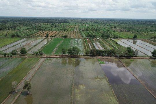 Balitbangtan kembangkan teknologi peningkatan produktivitas lahan rawa