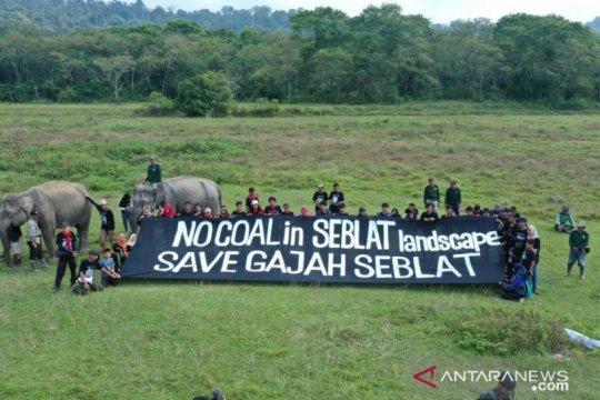 Aktivis LH: UU Minerba ancam habitat gajah Sumatera di Bengkulu