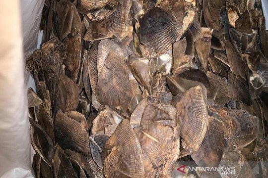 Gakkum LHK SW II Sumatera sita ribuan sisik trenggiling di Pekanbaru