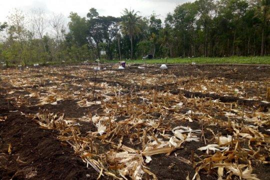 Balitbangtan sebut perlu pupuk organik kembalikan tanah sehat