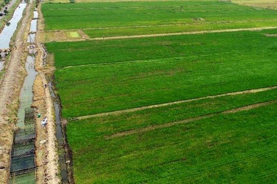 Balibangtan: Optimalisasi lahan rawa strategi amankan pangan MK 2020