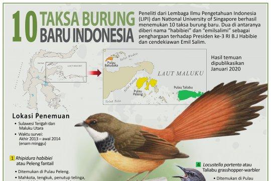 10 taksa burung baru Indonesia
