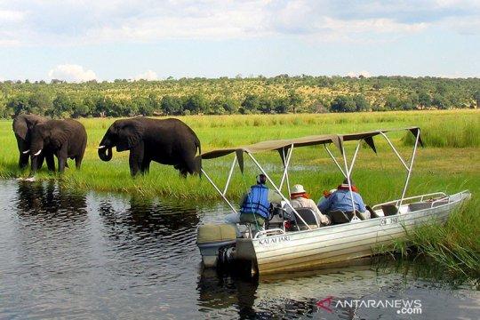 Botswana selidiki kematian misterius 154 gajah