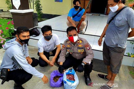 Polisi Kapuas tangkap pelaku pembunuhan satwa dilindungi