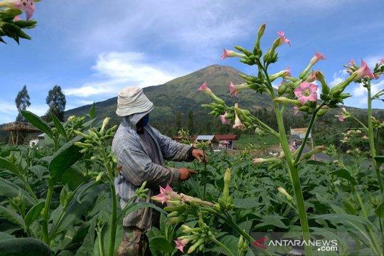 Hidupkan mata air, Pemkab Temanggung lakukan konservasi lahan kritis