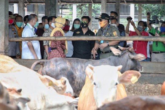 Kementan: holding BUMN pangan perkuat sektor peternakan nasional