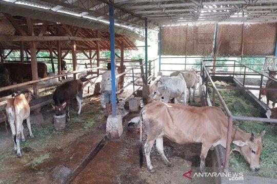 Kementan jadikan Subang proyek pengembangan korporasi sapi potong