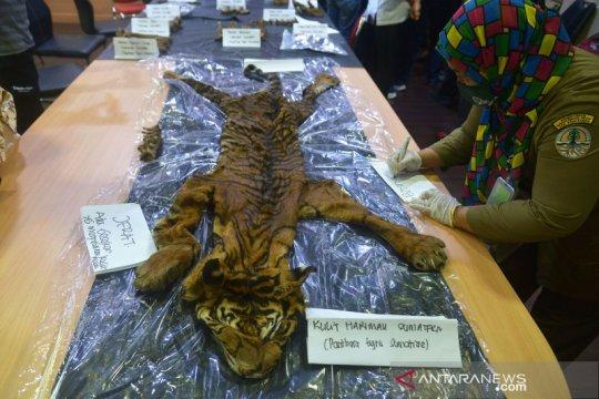 Polda Aceh gagalkan perdagangan kulit harimau sumatera