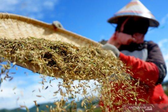 Megawati: Kebutuhan pangan diperlukan di tengah ancaman resesi