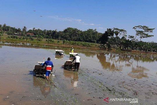 Dinas Pertanian optimistis stok pangan di Kabupaten Cilacap meningkat