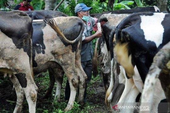 Dompet Dhuafa siap salurkan daging kurban selama COVID-19