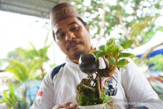 Budi daya bonsai kelapa makin diminati di Gorontalo