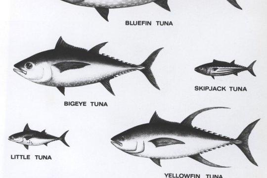 Ekspor ikan dan udang Sumut naik 16,3 persen