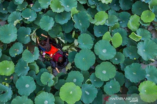 Megawati pilih bunga Lotus untuk gerakan cinta Ciliwung bersih