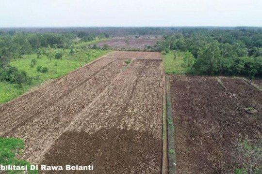 DPR ragukan kesiapan lahan pertanian 30 ribu ha di Kalteng pada 2020