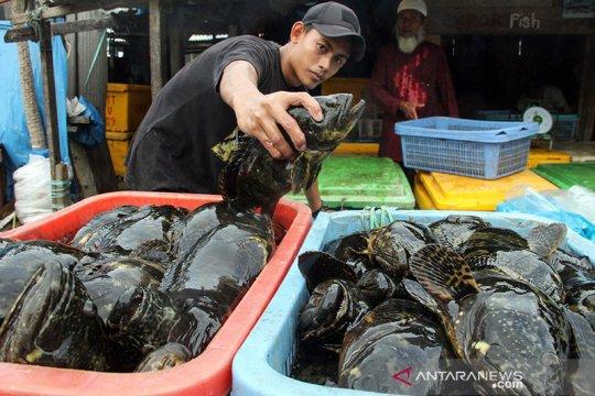 KKP dorong semakin banyak perusahaan ekspor ikan kerapu