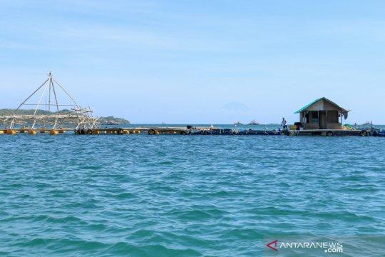 Perusahaan budi daya lobster asal NTB kejar kuota ekspor