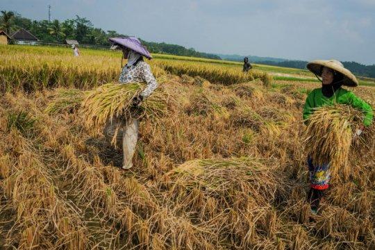 NTP Juli naik, Serikat Petani: belum cerminkan kondisi petani