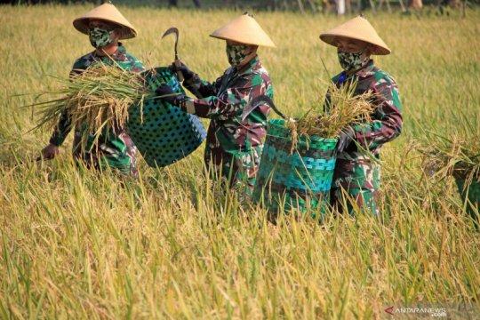 Jawa Tengah diperkirakan surplus beras 2,8 juta ton tahun ini