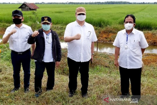 Menko Perekonomian: Lumbung pangan di Kalteng pilihan tepat