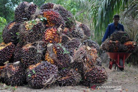 Harga CPO di Jambi turun Rp332 per kilogram