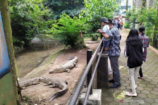 Kebun Binatang Bandung masih sepi di hari pertama AKB
