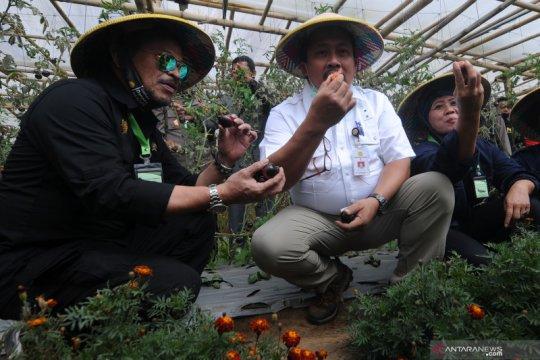 Menteri Pertanian panen sayur organik