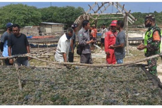 PT PP klarifikasi keluhan petani rumput laut di NTT