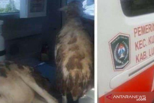 Ambulans angkut kambing, Wabup Lumajang ancam tindak tegas