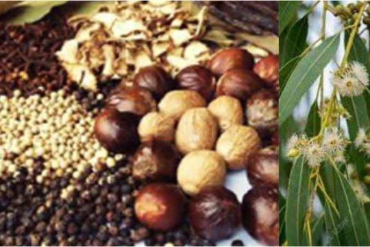 Ahli: Puluhan ribu tanaman di Indonesia belum tereksplorasi jadi obat