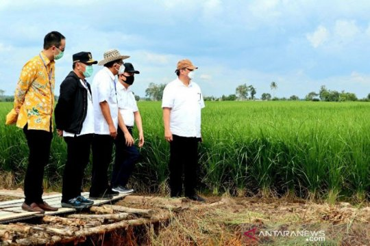 "Legislator nilai Kementan belum optimal dukung ""food estate"" Kalteng"