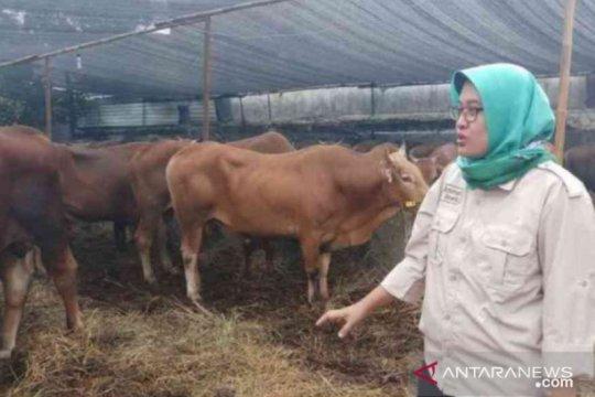 Antisipasi COVID-19, lapak pedagang hewan kurban di Bekasi disisir